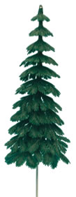 Large Evergreen Fir Tree