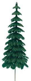 Large Evergreen Fir Tree